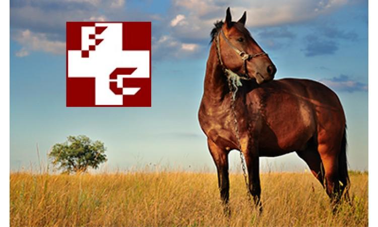 Farmácia do Cavalo